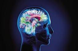 Cerveau MOD